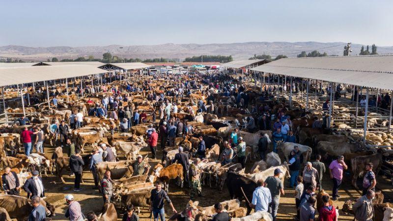 """Türkiye'nin """"en büyük"""" canlı hayvan pazarı yoğun günler yaşıyor"""