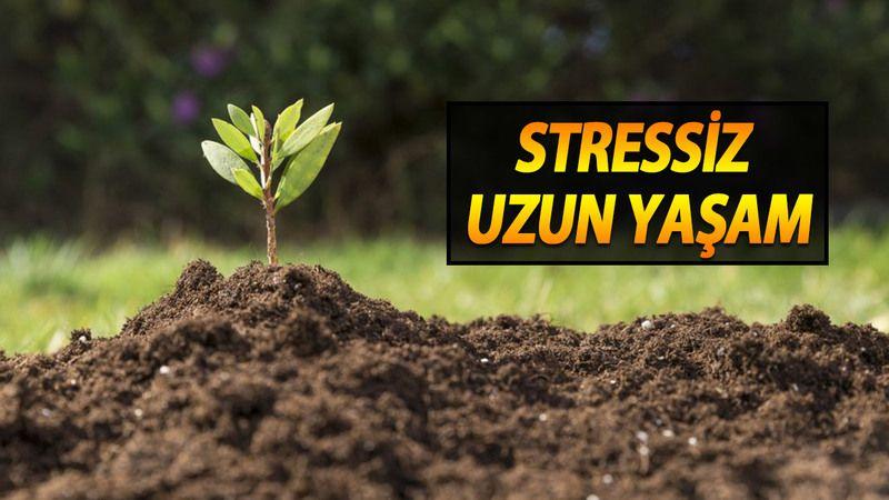 Toprağın insana faydaları nelerdir? Stressiz, uzun yaşam! Toprak ve bahçe ile uğraşmanın faydaları nelerdir?