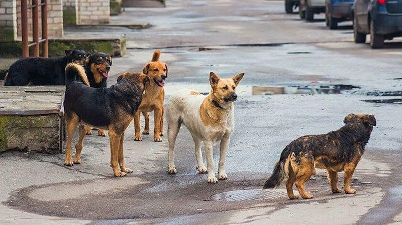 Başıboş Sokak Köpekleri Genç Kıza Saldırdı! Derince 60 Evler'de Dehşet Anları...