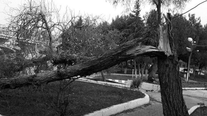 Yeni Cuma Camii Bahçesinde Feci Olay! Ağaç Devrildi, Neler Oluyor?