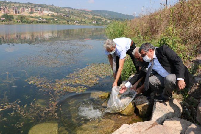 Kocaeli Göletlerinde Balık Stoğu Artıyor! Binlerce Yavru Sazan Bırakıldı