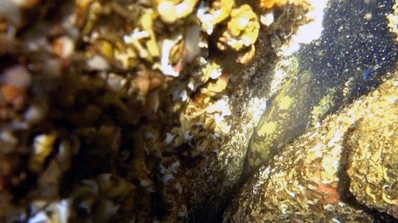 Müsilaj Bitti Marmara Kendine Geldi: Müjdeler Olsun, Marmara Denizi'nde Orfoz Görüntülendi! Bu Yaz Marmara'da Yüzmeye Hazır Mısınız?