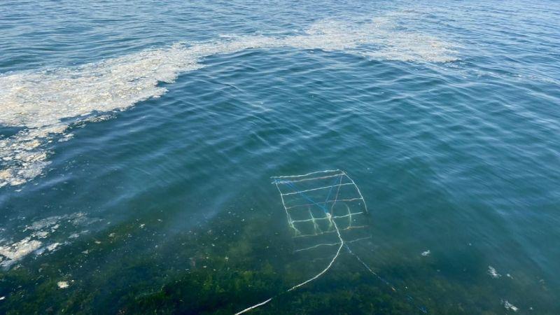 Gençlerin projesi denizi temizleyerek canlı popülasyonunu arttıracak