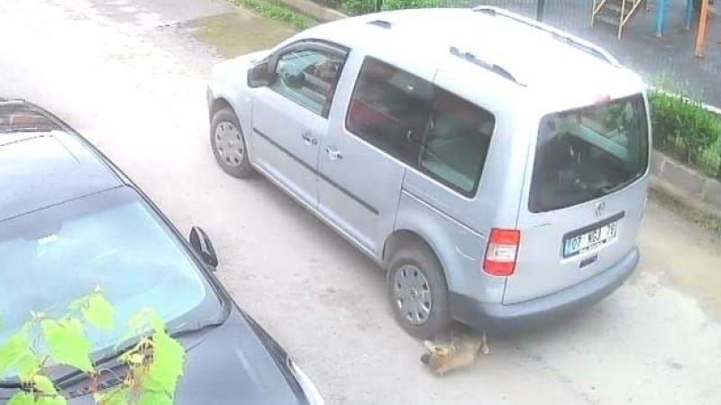 Yavuru köpeği ezmişti cezasız kalmadı