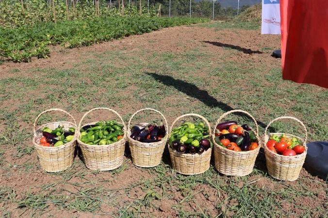 Tarımsal Üretim Bahçesi'nde yazlık bakımlar sürüyor