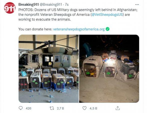 ABD yüzlerce köpeği kafeste bırakıp gitti