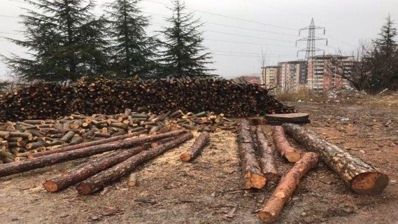 Japonlar ağaç katliamı yapmadan odun elde etti!