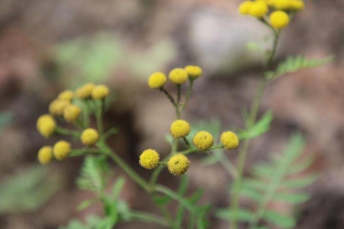 Ormanya'daki canlı türleri kayıt altına alındı