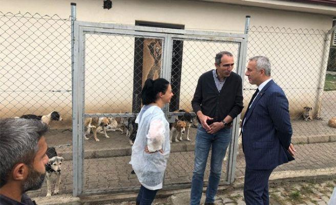 Hendek'teki hayvan barınağı yenilenecek