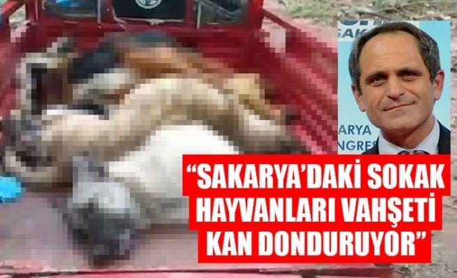 """""""Sakarya'daki sokak hayvanları vahşeti kan donduruyor"""""""