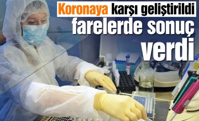 Korona aşısı farelerde sonuç verdi