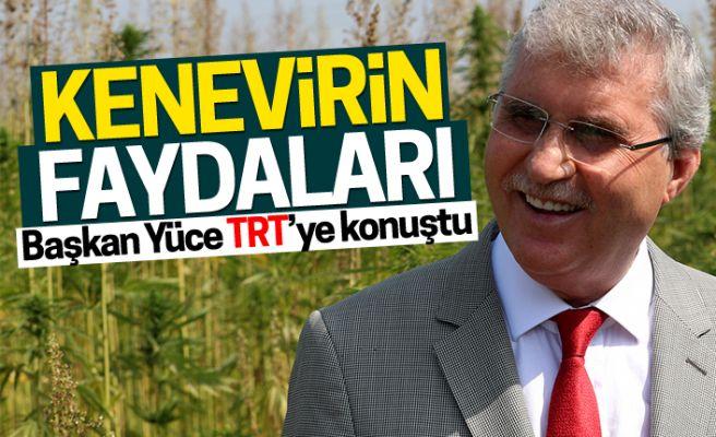 Başkan Yüce kenevirleri TRT'ye anlattı