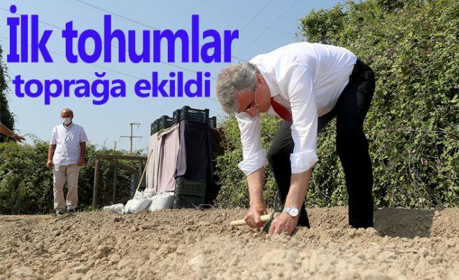 Salep üretimi için tohumlar toprakta