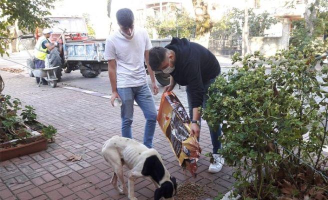 Mahalleleri gezip sokak hayvanlarını beslediler