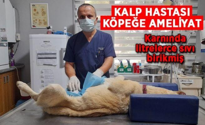 Kalp yetmezliği çeken köpeğe ameliyat