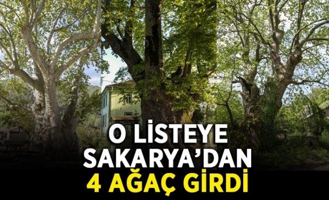 'Anıt ağaçlar' arasında Sakarya'dan 4 ağaç...