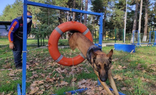 AFAD'ın kahraman köpekleri böyle eğitiliyor