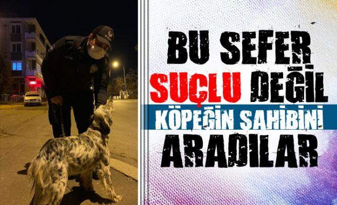 Firar eden köpeğe polis ekipleri sahip çıktı