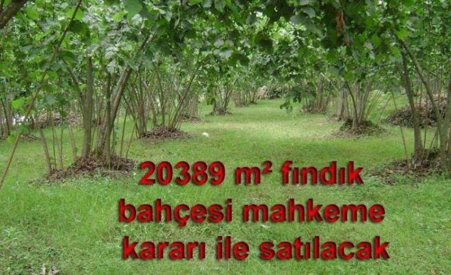 20389 m² fındık bahçesi mahkeme kararı ile satılacak