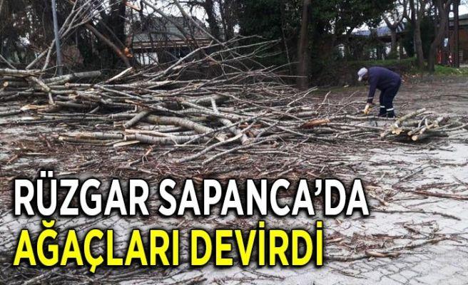 Sapanca'da rüzgar sonrası ağaç temizliği