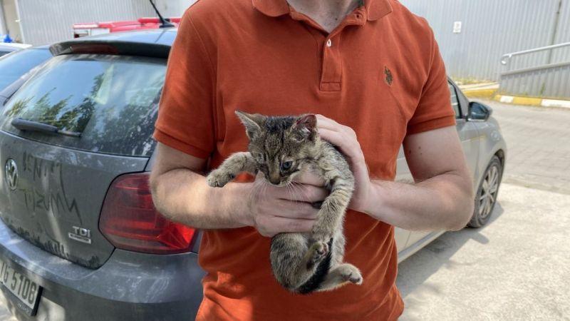Serdivan'da yavru kedi operasyonu
