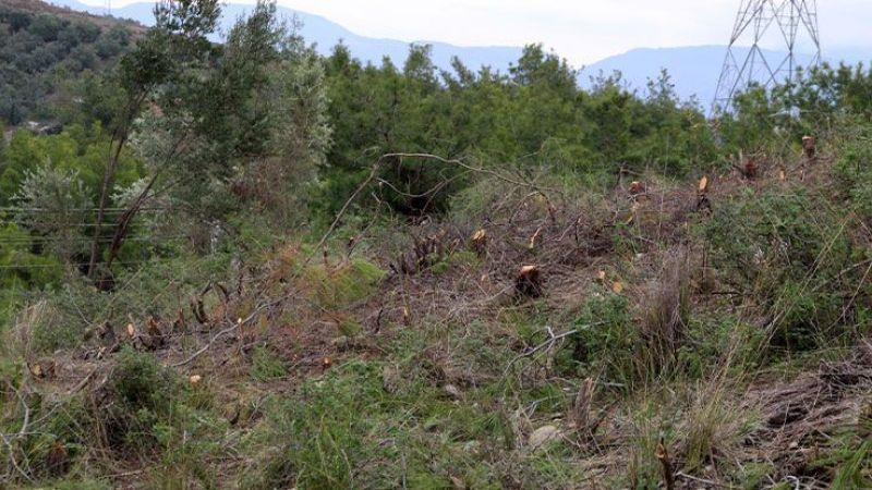 Orman memurlarına saldırıp gasp ettiler!