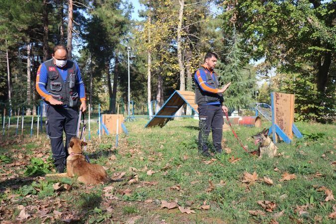 Altın burunlu köpekler Sakarya'da seçilecek
