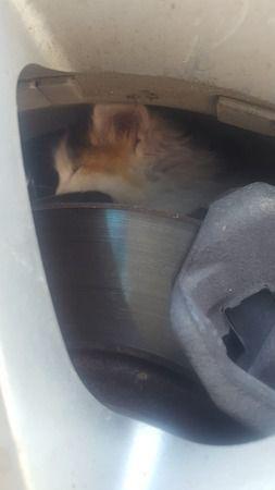 Çocuklar yavru kedinin hayatını kurtardı