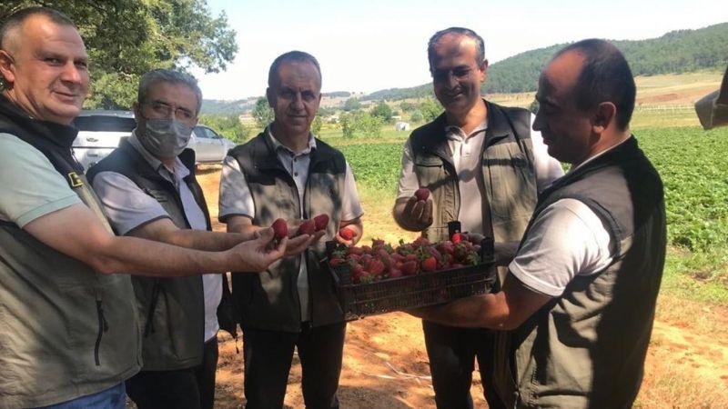 Orman köylüsüne çilek üretim desteği