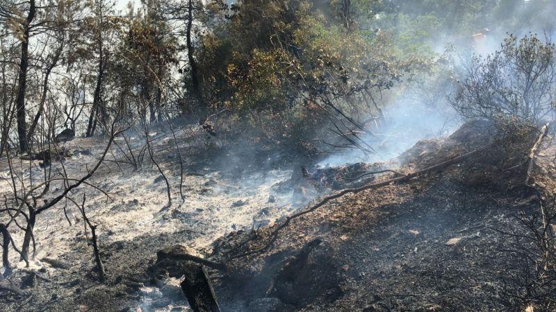 Sınır ilçemizde orman yandı!