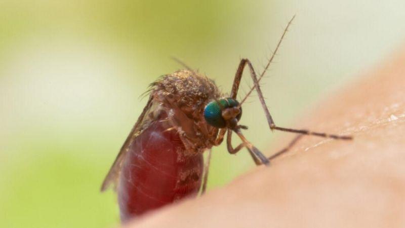 Asya Kaplan Sivrisineği tehlikesi büyüyor
