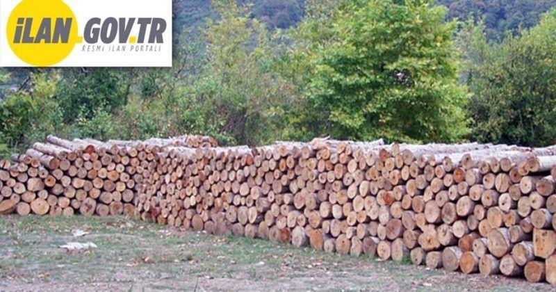 Orman emvali istifleme hizmeti alınacak