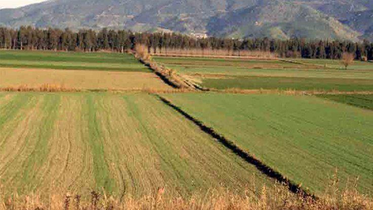 4 tarım arazisi mahkeme tarafından satılacak