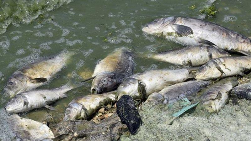 Balık ölümleriyle ilgili inceleme başlatıldı