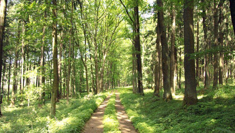 Orman yolunda üst yapı işleri yapılacak