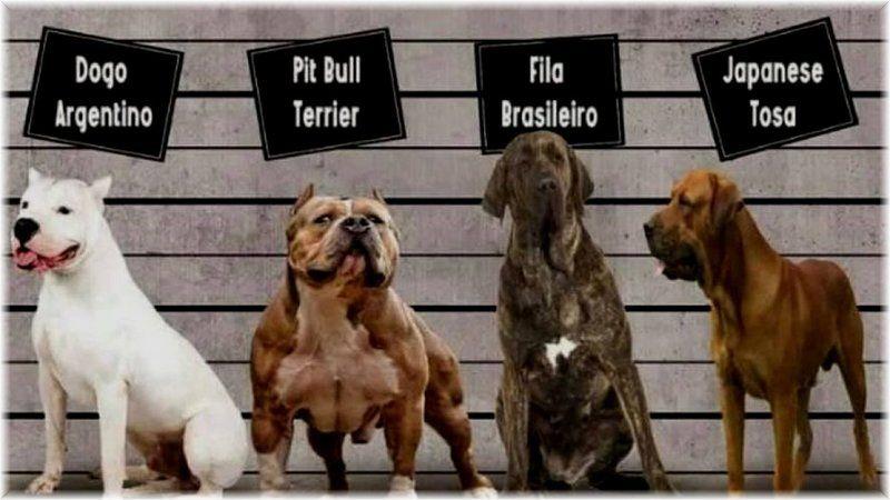 Irk köpek besleyenler dikkat!