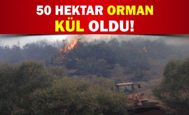 50 Hektar Orman Kül Oldu