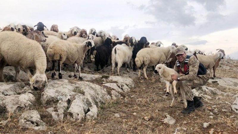 Elbistan'da kaybolan 70 küçükbaş hayvanı jandarma buldu