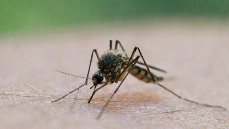 Bilim Kurulu Üyesi Açıkladı: Sinekler koronavirüs bulaştırır mı?