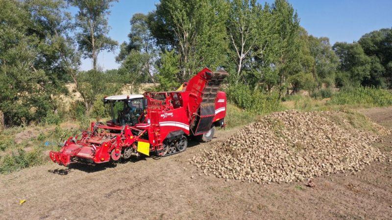 Elbistan'da şeker pancarı hasadı gelişmiş makinalarla yapılıyor