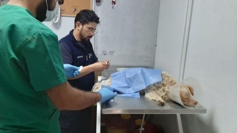 İnsanlık dersi: Elbistan'da yaralı köpeğe sahip çıktılar