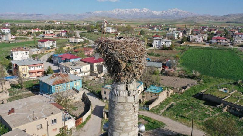 Elbistan'a gelen leylekler 62 yıldır aynı minarede konaklıyor