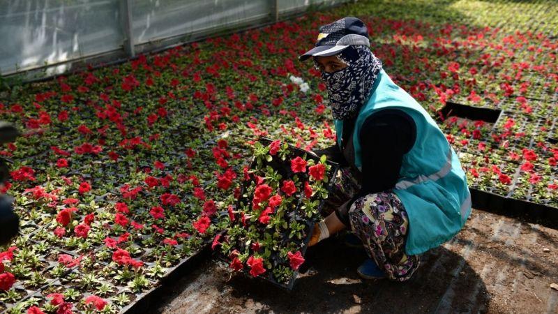 Elbistan, seralarda üretilen bu çiçeklerle süsleniyor