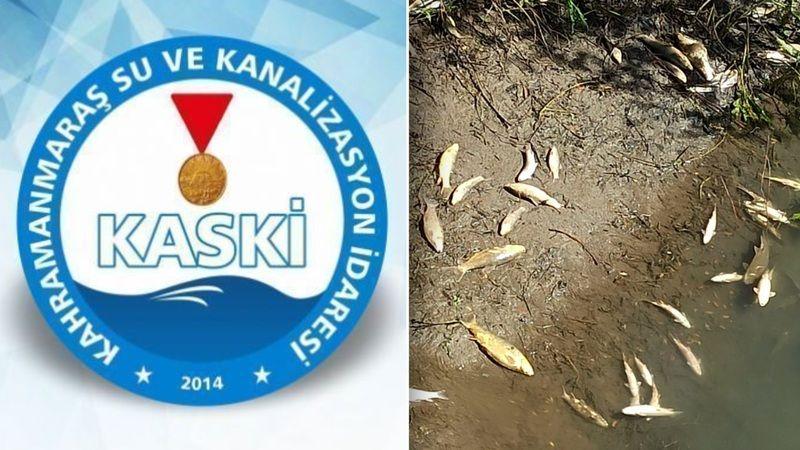 Bir gram faydaları yok! Elbistan'da binlerce balık KASKİ yüzünden öldü