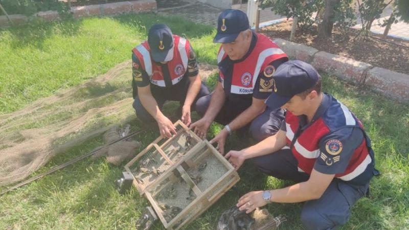 Tuzakla saka kuşu avlayan 2 kişiye 43 bin lira ceza