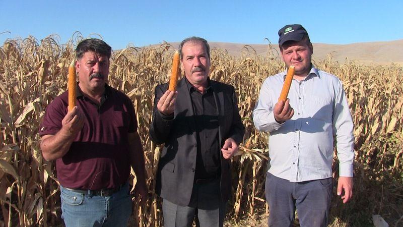 Elbistan'da üretilen 'cin mısırı' 26 ülkeye ihraç ediliyor