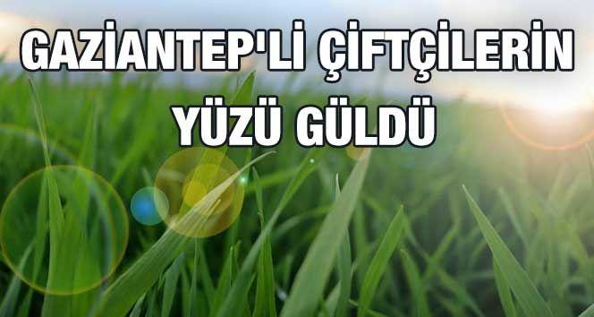 Gaziantep'li Çiftçilerin Yüzü Güldü...Kuraklık Korkusu Sona Erdi