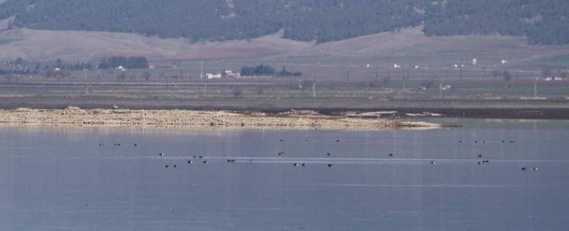 Tahtaköprü Baraj Göleti'nde KOSK sayımı yapıldı
