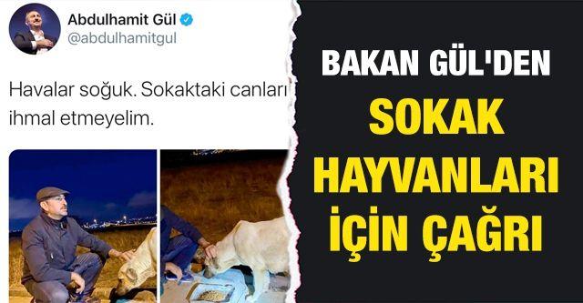 Bakan Gül'den sokak hayvanları için çağrı