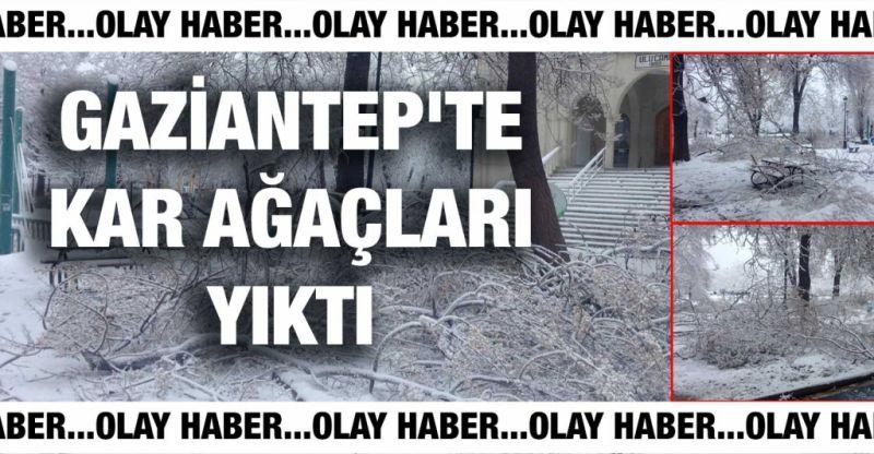Son Dakika..Gaziantep'te Kar Ağaçları Yıktı…100. Yıl Park'ında Ağaçlar Kara Dayanamadı